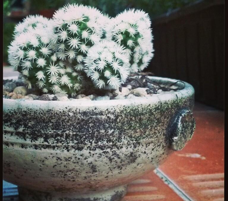 Doniczka na kaktusa