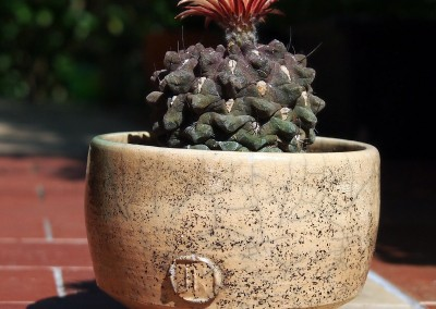 Doniczka do kaktusa #68