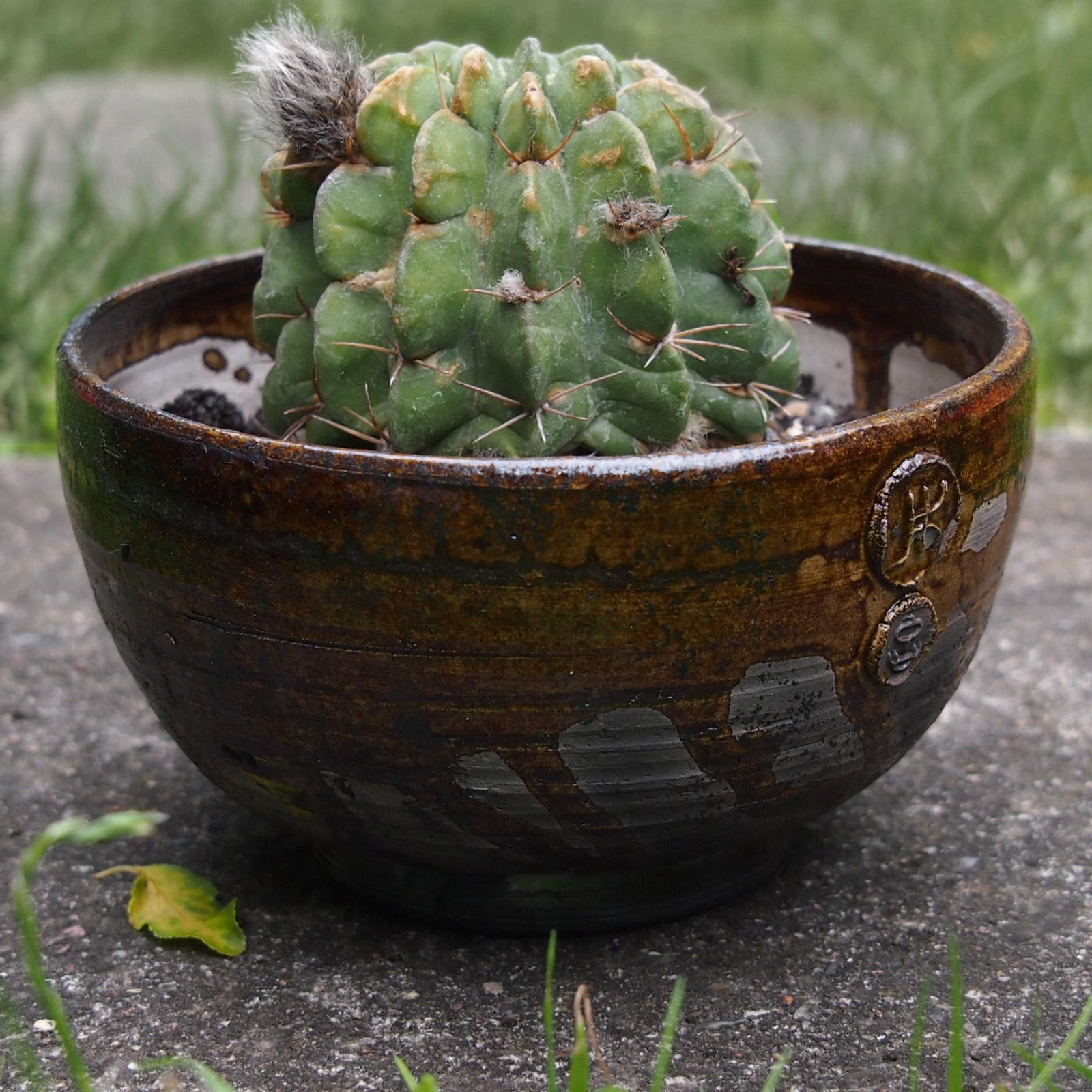 """""""Bursztynowa"""" doniczka na kaktusa"""