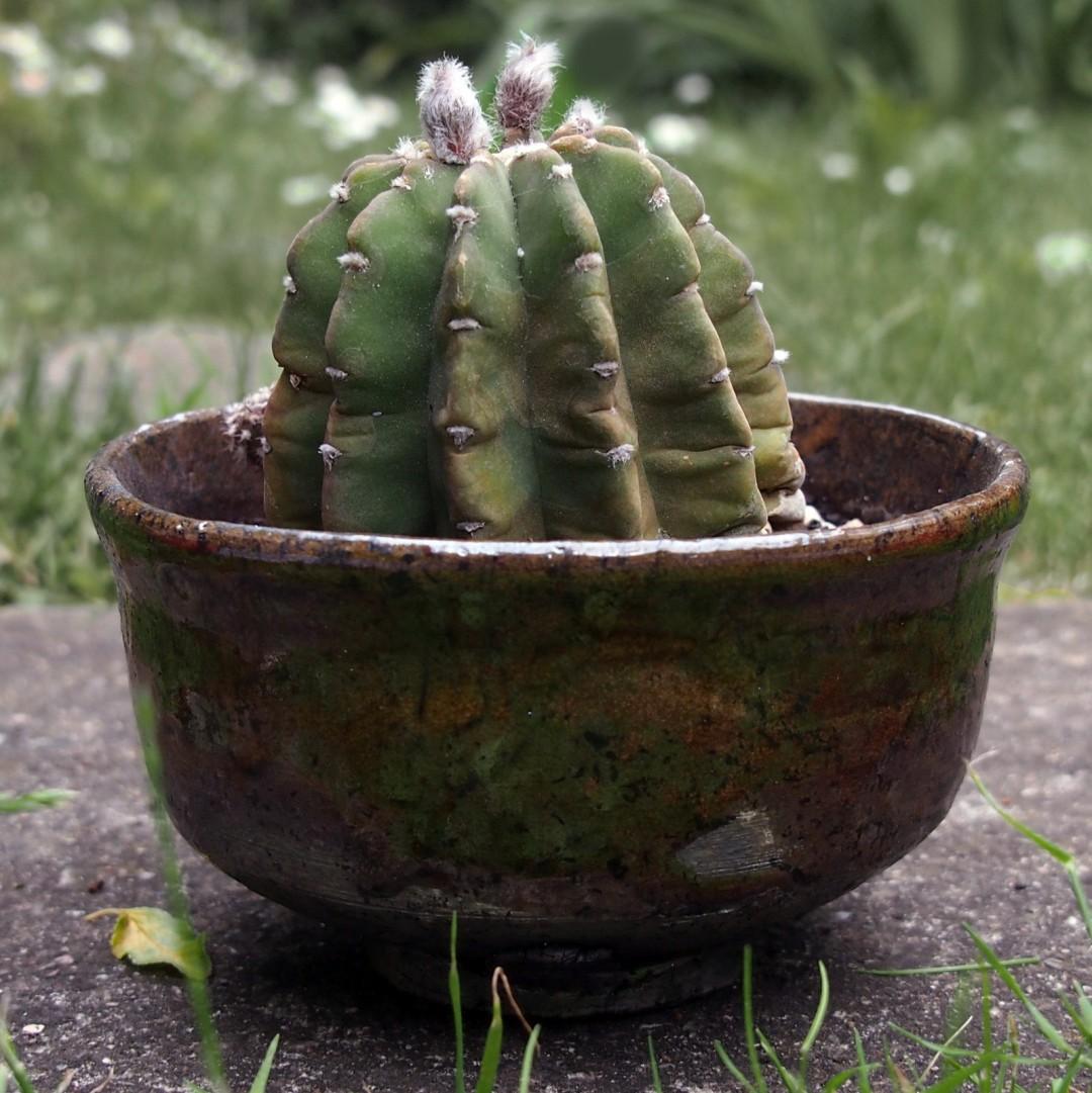 Ceramiczny cache-pot